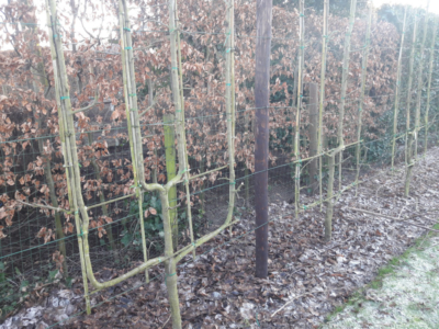 fruitboomkwekerij_verzorging bomen